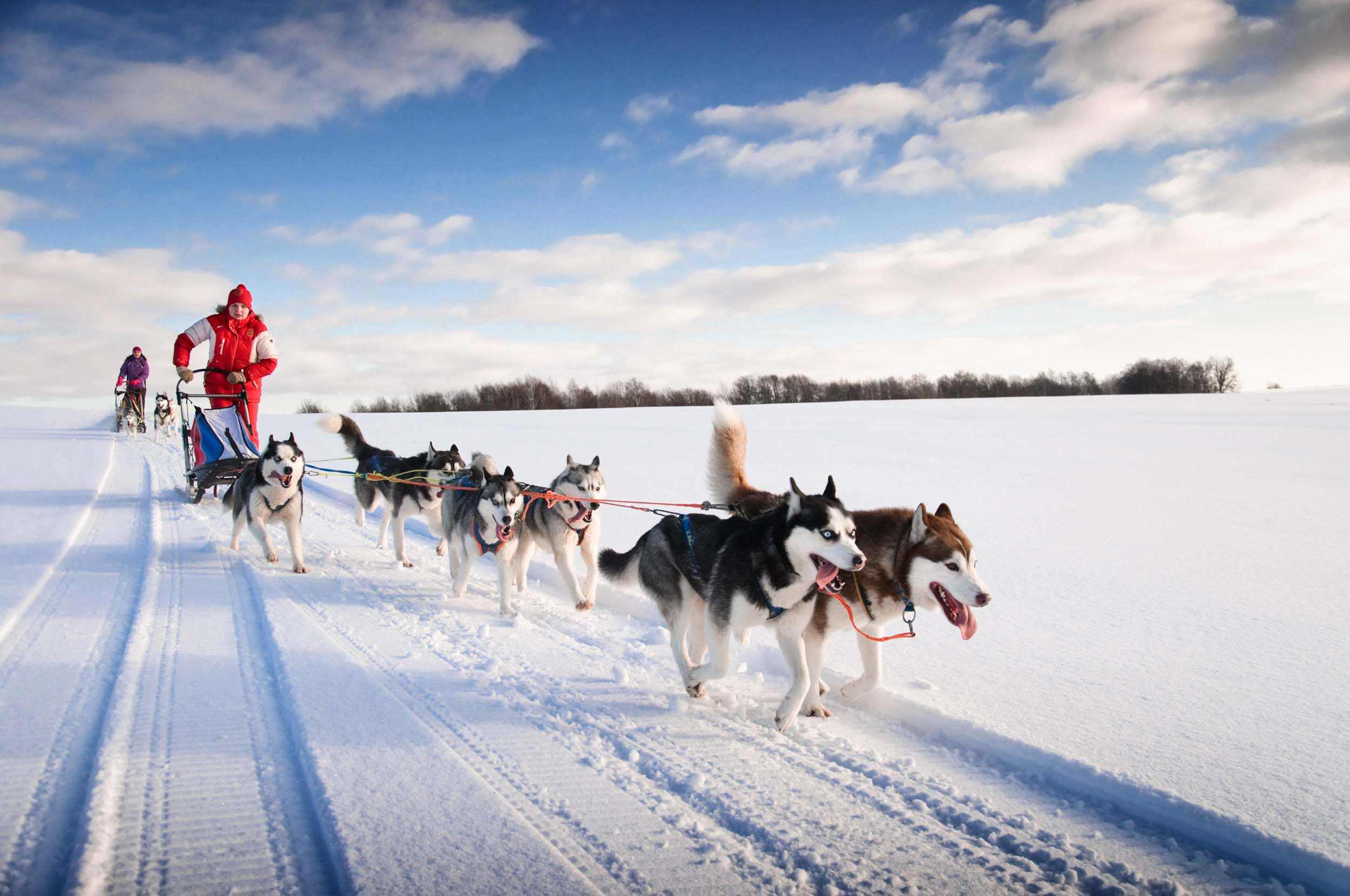 Dog sledding | Land Rover Explore